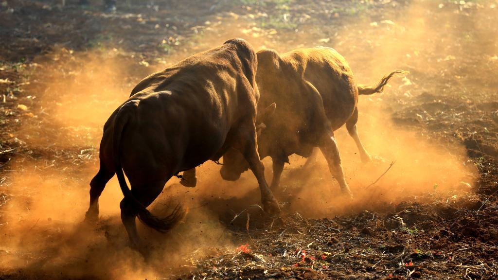 斗牛游戏:可能就是像在讲一个斗牛的过程